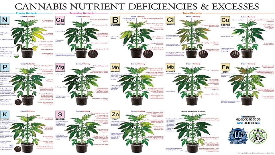 Cannabis Nutrient Chart