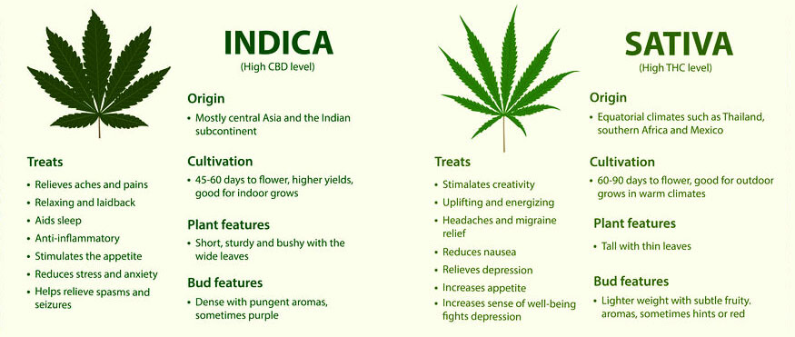 Sativa vs Indica horizontal infographic